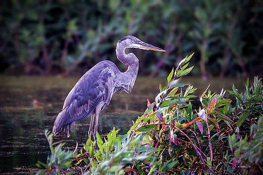 Great Blue Heron In Marsh by Brian Wallace