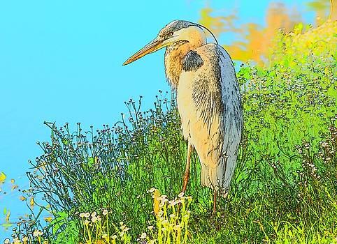Patricia Twardzik - Great Blue Heron in the Grass