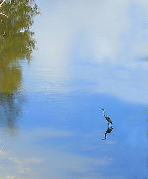 Great Blue Heron by Jim Sauchyn