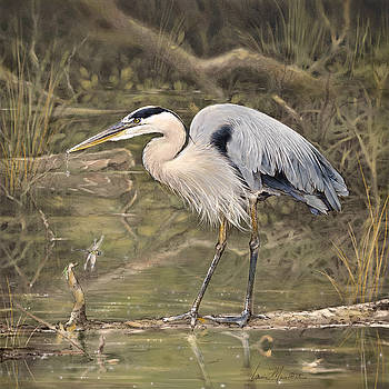 Great Blue Heron by Laurie Musser