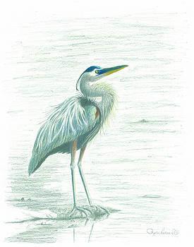 Phyllis Howard - Great Blue Heron