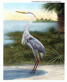 Great blue heron vintage postcard by Jennifer Capo
