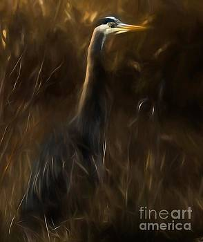 Great Blue Heron by Sal Ahmed