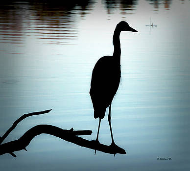 Great Blue Heron Silhouette by Brian Wallace
