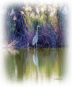 Great Blue Heron Standing Tall by Brian Wallace