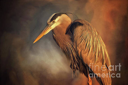 Great Blue Heron by Tim Wemple