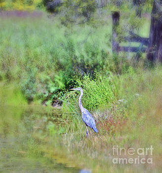 Great Blue Heron Visitor by Kerri Farley