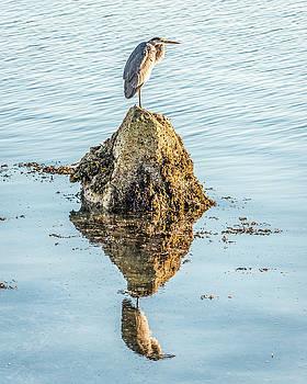 Great Blue Reflection by Tim Sullivan