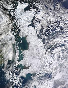 Artistic Panda - Great Britain Snowy