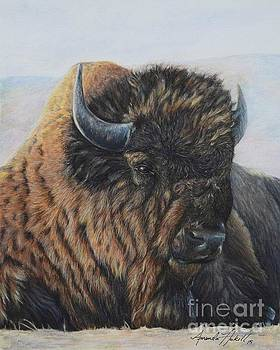Great Buffalo by Amanda Hukill