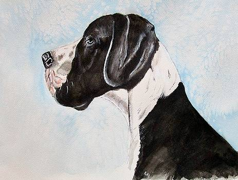 Great Dane by Carol Blackhurst