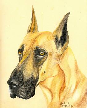Great Dane by Elena Malec