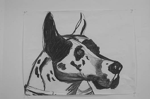 Great Dane by Emory Goins