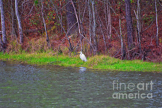 Great Egret at Mayor's Pond by Gregory Schultz