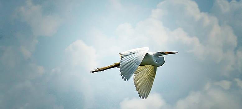 Bonnie Davidson - Great Egret