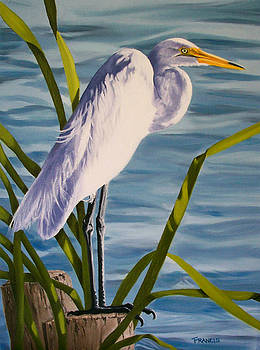 Great Egret by Donna Francis