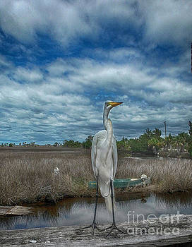 Great Egret by Judy Hall-Folde