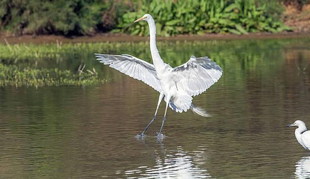 Great Egret Landing 9385-022218-1cr by Tam Ryan