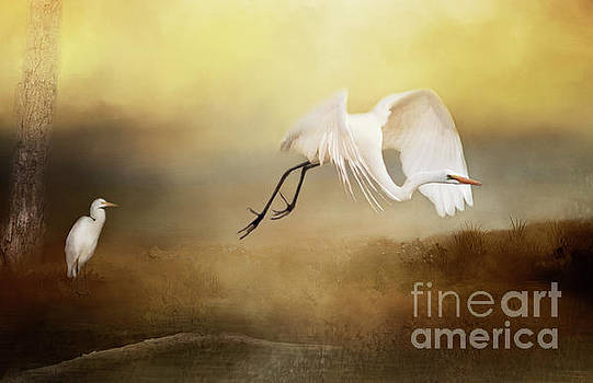 Great Egret by Pam  Holdsworth