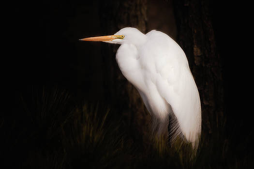 Great Egret Portrait by Michael and Lisa McStamp