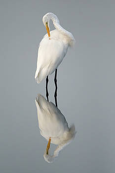 Great Egret Reflection by George DeCamp