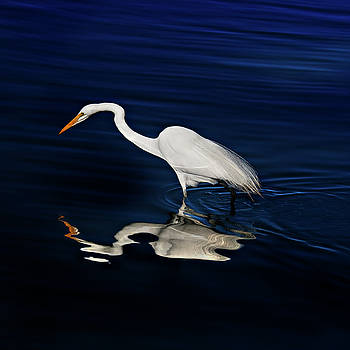 Susan Gary - Great Egret-Self Reflections