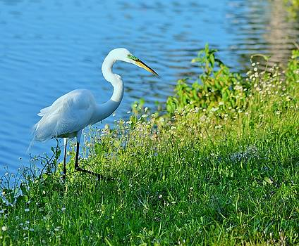 Great Egret Stance by Patricia Twardzik