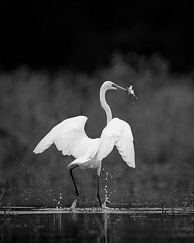 Jeff Phillippi - Great Egret with Two Fish