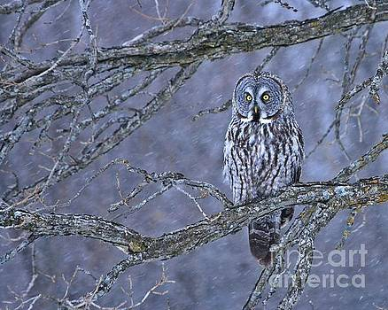 Great Gray Winter Wonderland by Heather King