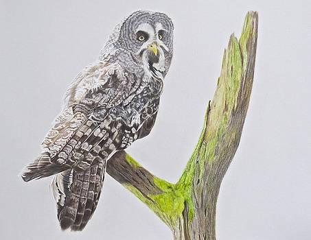 Great Grey Owl by Michelle McAdams