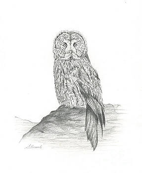 Great Grey Owl on Rock by Sarah Bevard