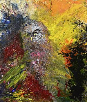 Great Grey Owl by Sean Seal
