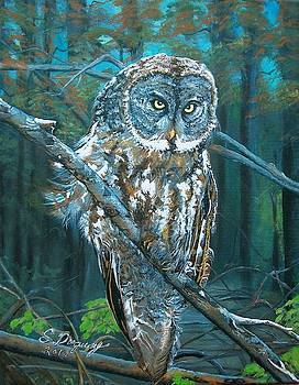 Great Grey Owl by Sharon Duguay