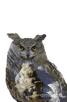 Great Horned Owl and Mammoth Hot Springs by DS Dodd