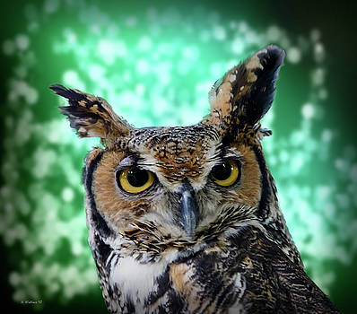 Great Horned Owl Face by Brian Wallace
