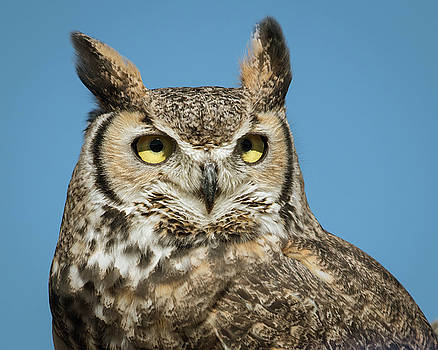 Rosemary Woods-Desert Rose Images - Great Horned owl-IMG_888717