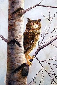Frank Wilson - GREAT HORNED OWL IN BIRCH