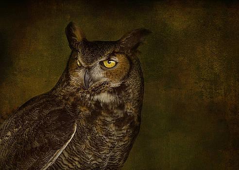 Great Horned Owl by Pat Abbott
