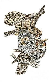 Great Horned Owl by Scott Rashid