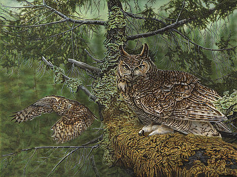 Great Horned Owls by Wayne Pruse