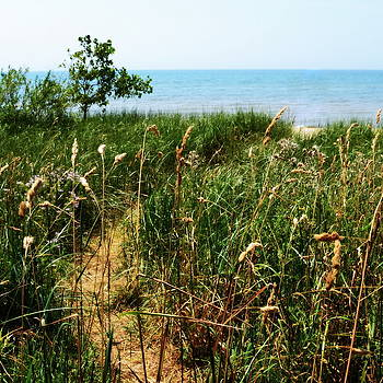 Great Lake Beach Path by Michelle Calkins