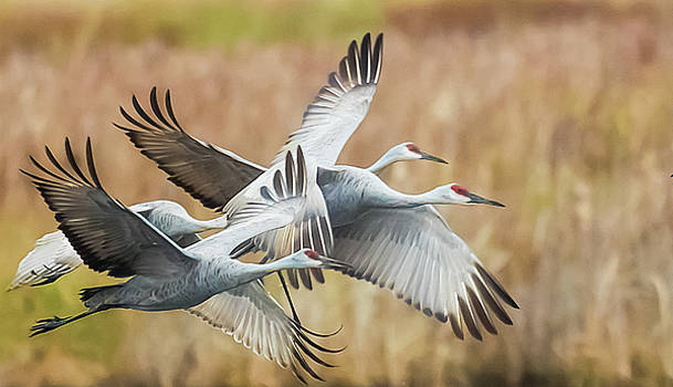 Great Migration  by Kelly Marquardt