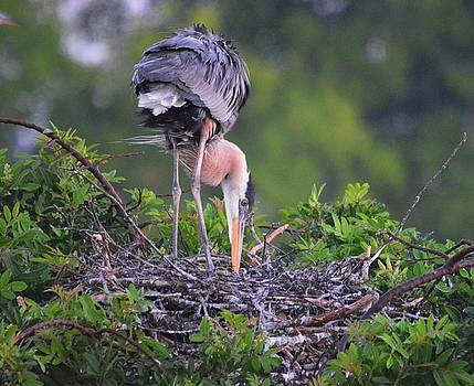 Patricia Twardzik - Great Nesting Beauty