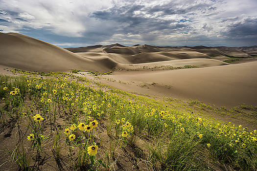 Great Sand Dunes Colorado 4 by Whit Richardson