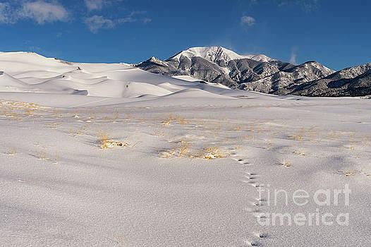 Great Sand Dunes in Winter by Tibor Vari