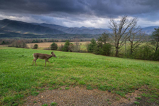 Great Smoky Mountain National Park - Cades Cove Doe  by Jason Penland