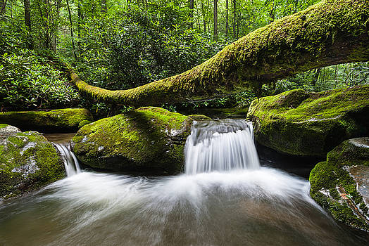 Great Smoky Mountains National Park Roaring Fork by Mark VanDyke