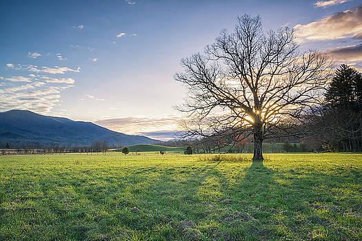 Great Smoky Mountains National Park - Springtime  by Jason Penland