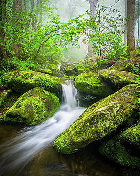 Great Smoky Mountains TN Misty Roaring Fork by Robert Stephens