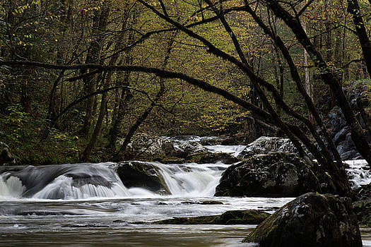 Great Smoky Mountains - Trees arching over rocks by Natalie Schorr